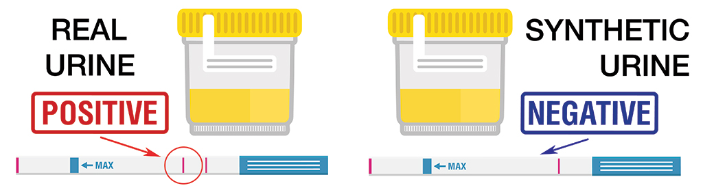 differences between real urine and synthetic urine with positive and negative drug tests